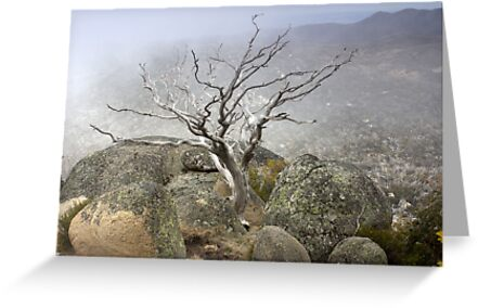Rock and Mist by Bruce Reardon