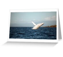 Show Off - Migaloo the white whale Greeting Card