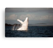 White Whale Wave - Migaloo Canvas Print