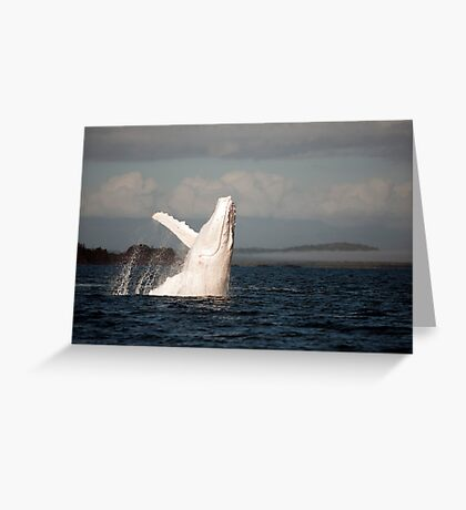 White Whale Wave - Migaloo Greeting Card