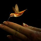 A BIRD IN THE HAND IS WORTH TWO IN THE BUSH~ by RoseMarie747