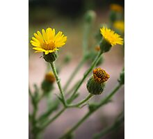 Budding Flowers Photographic Print