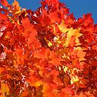 RED Nature Art Prints Orange Yellow Autumn Leaves Trees by BasleeArtPrints