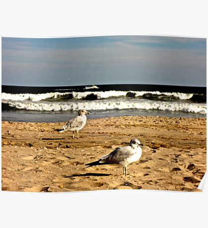 seagulls Poster