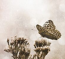 PAPILLONS - 1 by MadiS