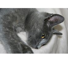 Close Up Portrait Of A Relaxed Grey Cat Photographic Print