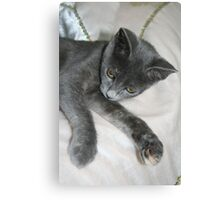 Cute Grey Kitten Relaxing Canvas Print