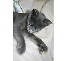Cute Grey Kitten Relaxing Photographic Print