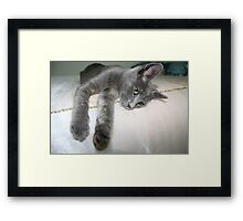 Russian Grey Cross Tabby Cat Framed Print