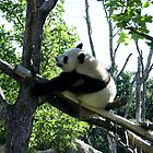 Great Panda by TheSmileEffect