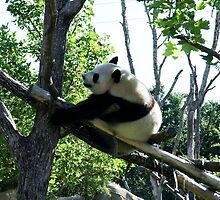 Great Panda by TheSmileEffect