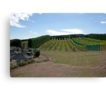 Hillside Vineyard Canvas Print