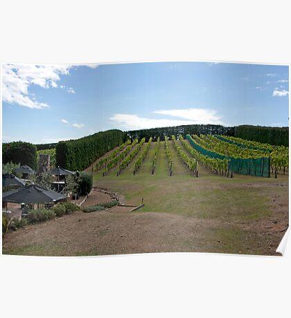 Hillside Vineyard Poster