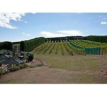 Hillside Vineyard Photographic Print