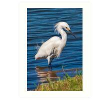 Snowy Egret at the Pond  Art Print