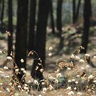 Fluffy Grass #2 by KUJO-Photo