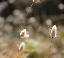 Fluffy Grass #3 by KUJO-Photo