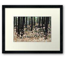 Fluffy Grass #4 Framed Print