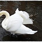 """""""As the tide gets higher the swans take advantage"""" by Malcolm Chant"""