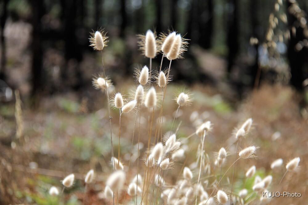 Fluffy Grass #5 by KUJO-Photo