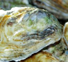 Oyster Shells Sticker