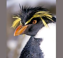 Rockhopper Penguin by theoneandonlypd