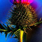 The flower of scotland by Gervlove