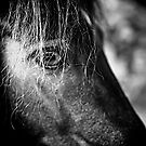 Little Pony by Alex Volkoff