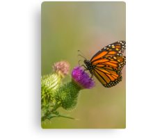 Monarch and Thistle Canvas Print