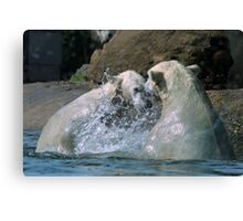 Polar bears playing in the water Canvas Print