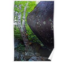 Giant Boulder Birch and Mushrooms Poster