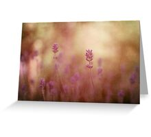 lavender flower  Greeting Card