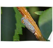Sharpshooter Leafhopper Poster