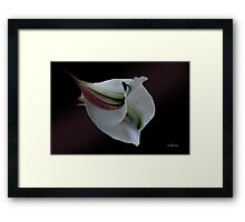 Burgundy Beauty Framed Print