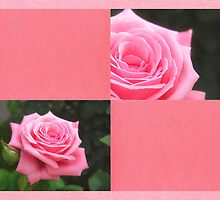 Pink Roses in Anzures 4 Blank Q11F0 by Christopher Johnson
