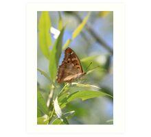 Lesser Purple Emperor butterfly, Rila Mountains, Bulgaria Art Print