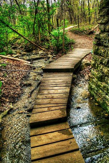 Path by Michael  Herrfurth
