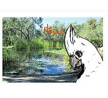 hello cocky Photographic Print