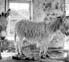 Donkeys of Blasket Sticker
