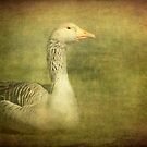 The Eye of the Goose by Clare Colins