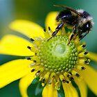 Belknap Bee by starwarsguy