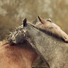 Equines by jamieleigh