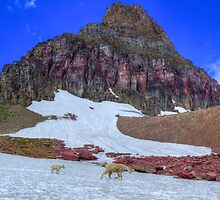 Mt. Reynolds with Goats by JamesA1