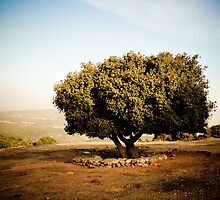 Tree on the Yam L'Yam Route by Yair Sakols