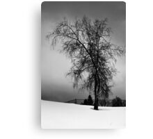 Birch in a Field Canvas Print