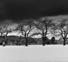 Apple Trees in Winter by Nazareth