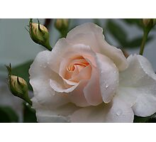 Pink Rose with Rain drops Photographic Print