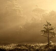 23.8.2013: August Morning I by Petri Volanen