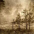 23.8.2013: August Morning III by Petri Volanen