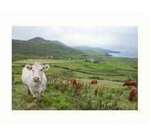 A Cow in Kerry Art Print